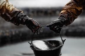 Депутат Госдумы предложил перестать экспортировать нефть