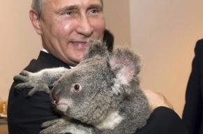 Путину сделали ролик ко «Дню друзей» с его лучшими фото