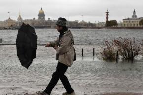 Сильный ветер ожидают в Петербурге днем в субботу