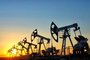 ОПЕК рассматривает возможность заморозки добычи нефти