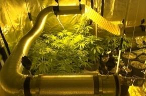Наркодиллерша выращивала коноплю в однокомнатной квартире