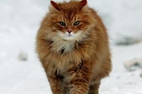 По факту взрыва кота петардой в Рязани проводится проверка