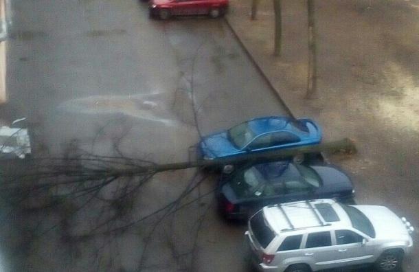 В аккурат между нами: дерево ювелирно рухнуло между двух машин