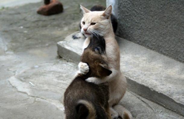 Белорусским котам запретят мяукать с 23:00 до 7:00