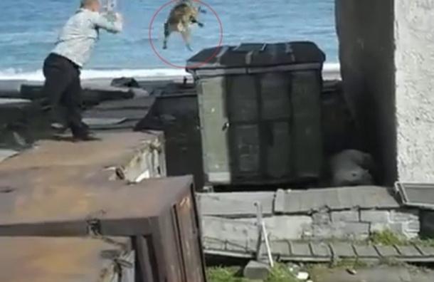 Собаку бросили живьем в лапы белого медведя в одном из поселков России