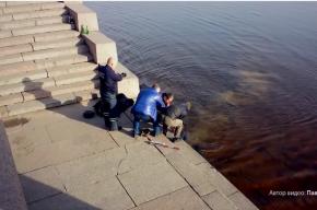 Сотрудники ДПС спасли утопающего из Невы
