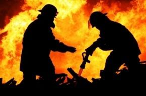 Пожарные спасли восемь человек из горящей квартиры на Лесном проспекте