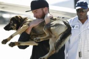 Пропавшую в море собаку нашли спустя месяц живой