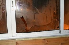 Неизвестный стреляет по окнам в Приморском районе