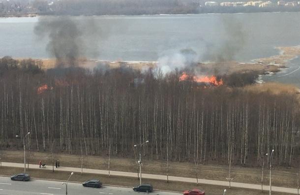 Пожар вспыхнул в Юнтоловском заказнике