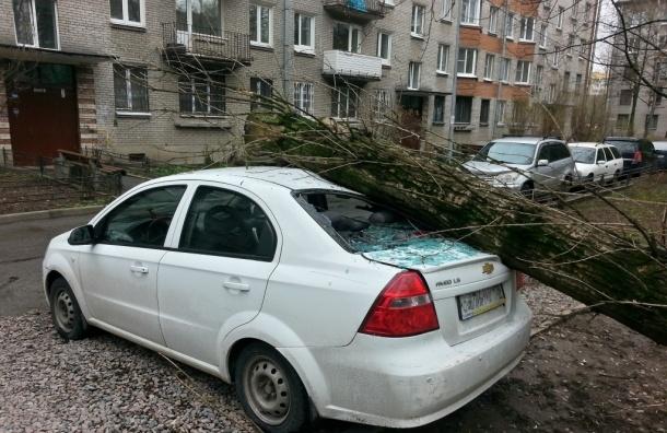 Тополь рухнул на машину на проспекте Стачек