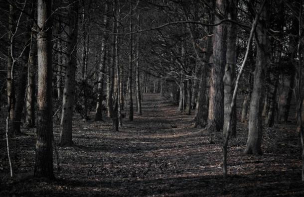 Труп молодой девушки нашли в сумке в лесу Ленобласти