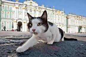 Эрмитажных котов не будут отдавать в руки дачников