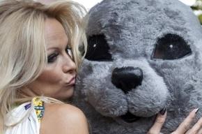 Памелу Андерсон пригласили спасать тюленей и нерп Балтики