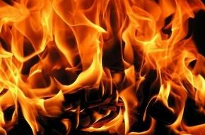Женщина сгорела на даче под Кировском