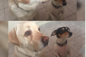 Состояние собаки Фриске резко ухудшилось из-за химиотерапии