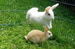 Ботанический сад Петербурга раздаст кроликов