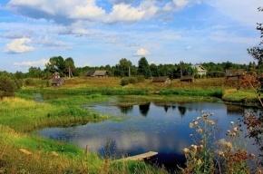 Лето треть россиян проведет на дачах или в деревне