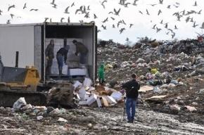 Почти 26 тонн санкционного сыра уничтожили на свалке в Ленобласти