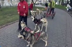 Чукчи на собаках пикетируют здание Минпромторга