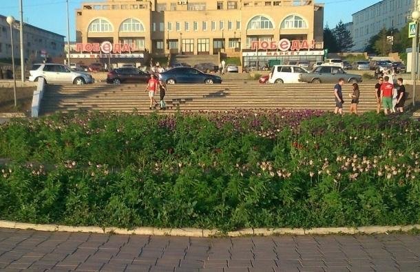 Власти Омска случайно высадили коноплю на клумбах города
