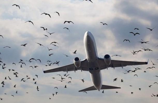 Самолет столкнулся с птицей в Пулково