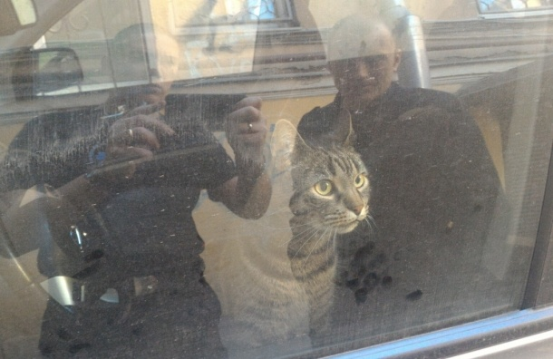 Запертый в машине кот четвертые сутки сидит во дворе на набережной Фонтанки
