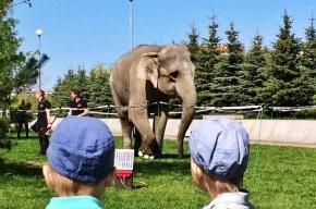 Слон гуляет по парку 300-летия