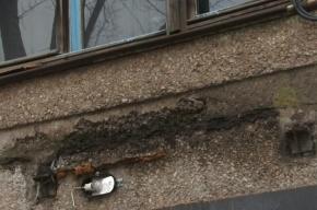 Кусок козырька рухнул на мать с ребенком в подъезде на Ярослава Гашека