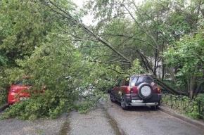 Дерево рухнуло на автомобили на Дунайском проспекте
