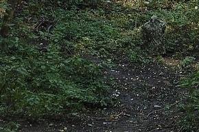 Труп мужчины в камуфляже нашли берегу Волхова