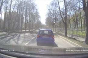 Дерево рухнуло на пассажирский автобус в Пушкине