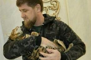 В Чечне ищут кота Кадырова
