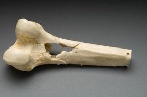 Расчлененный скелет нашли в Ленобласти