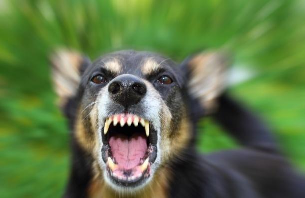 Мальчика 6 лет, выгнанного матерью, искусали собаки