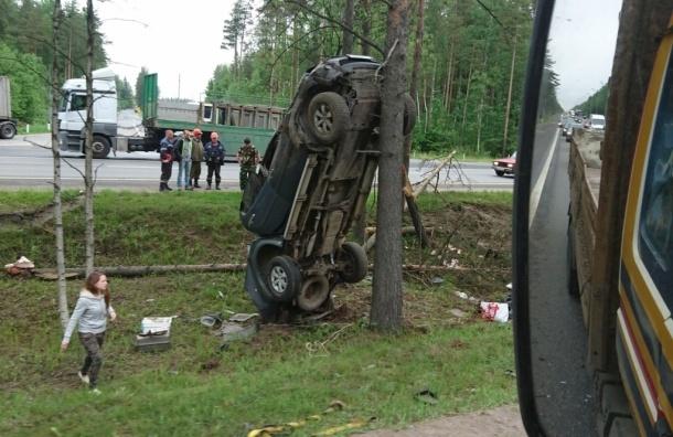 Внедорожник «залез» на дерево на Мурманском шоссе