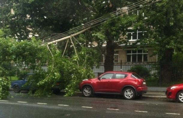 Ветер валил деревья в Петербурге