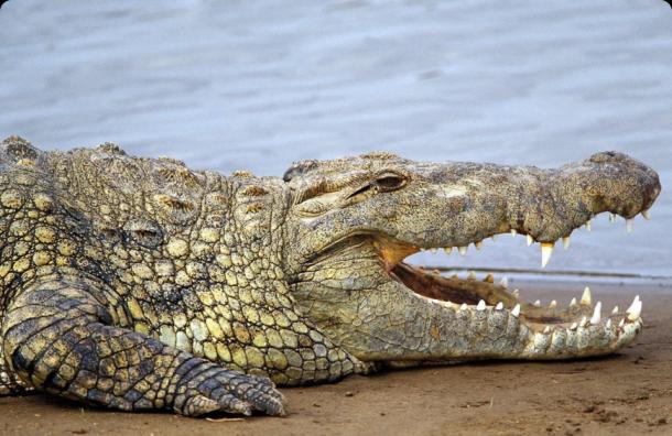 Никто не понесет ответственность за гибель ребенка от атаки аллигатора во Флориде