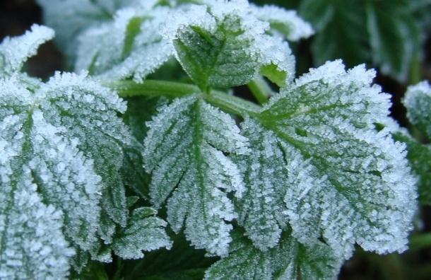Заморозки обещают в ближайшие два дня в Ленобласти