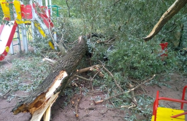 Сильный ветер в Петербурге валит деревья
