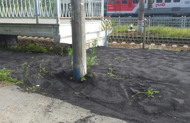 Асфальт поверх травы положили около станции «Шувалово»
