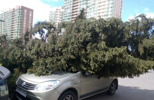 Ветер валит деревья и знаки в Санкт-Петербурге