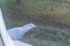 Пожилой мужчина выпал из окна в Купчино