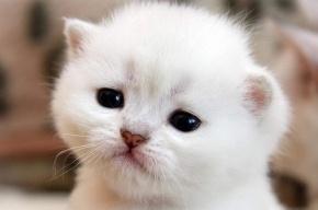 Наказать подростков за жестокую расправу над котенком потребовали пять тысяч человек