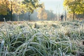 Заморозки придут в Петербург на следующей неделе