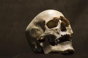 Студент нашел останки человека в Усть-Ижоре