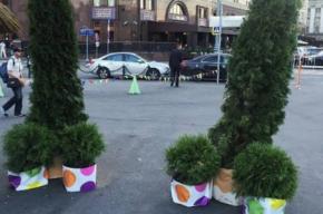 Появление «хвойных пенисов» на улице прокомментировали власти Москвы