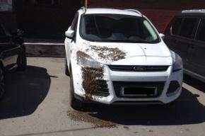 Рой пчел напал на Ford Kuga на проспекте Наставников
