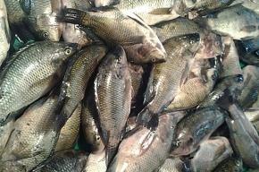 Рыбная биржа будет создана в Петербурге