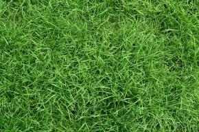 Пьяный житель Саратова потерял шестимесячного сына в траве